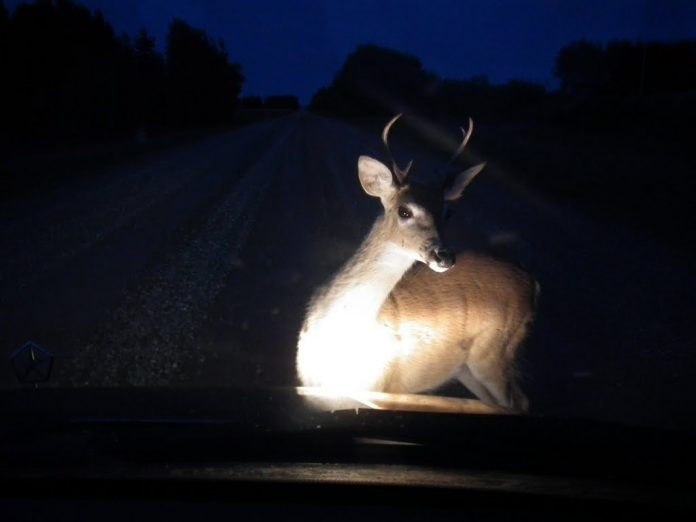 Use caution around deer
